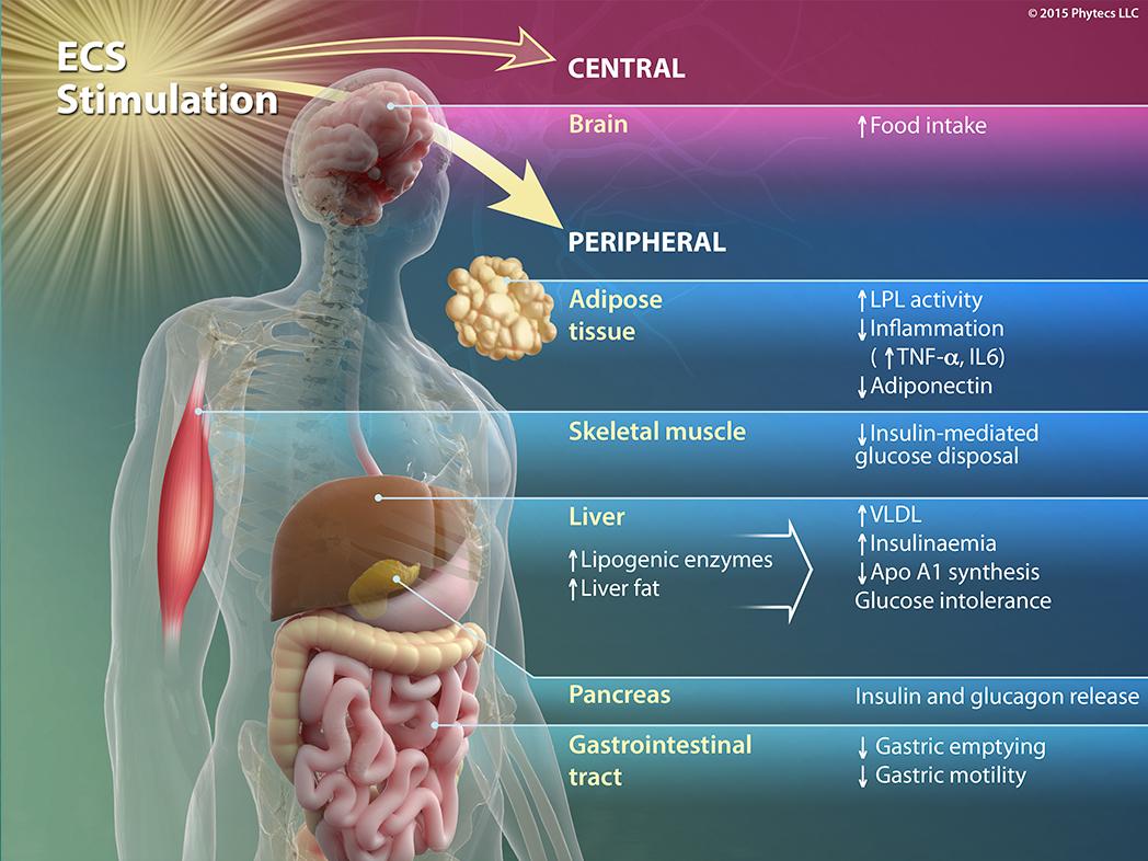 Ecs Stimulation Phytecs